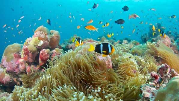 Discover an underwater paradise in Maldives